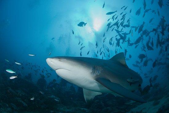 See sharks in Virginia Beach