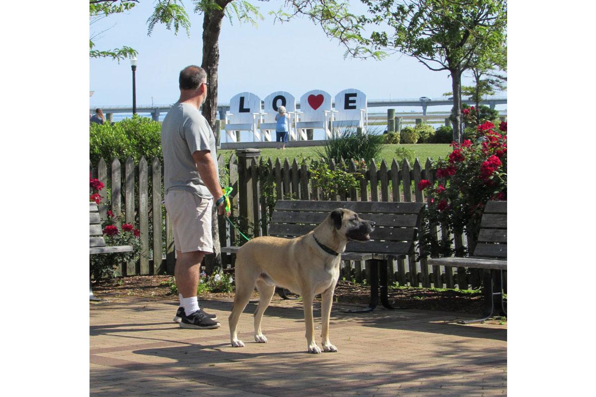 man and dog at robert reed park